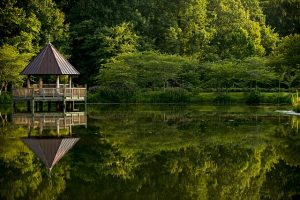 Virginia local movers. Lake, gazebo and trees.